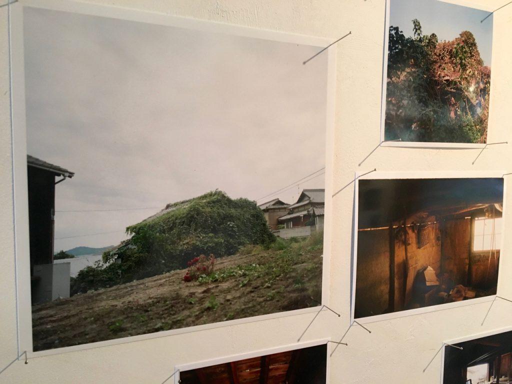 『男木島図書館ができるまで』展より。作業開始前の緑に覆われ尽くした古民家、ビンテージハウス、廃屋。。。